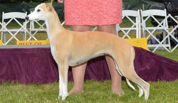 2021 Reserve Best In Show Image